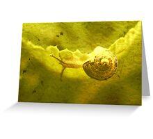 escargot II Greeting Card