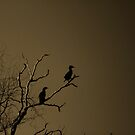 Roosting I by KirstyStewart