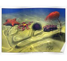 Echinodermata Poster