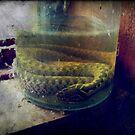 A Snake In A Bottle by Liis