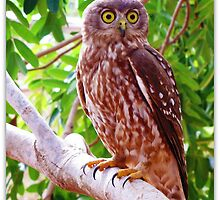 Barking Owl by dozzam