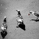 THREE WILD BIRDS by Paul Quixote Alleyne