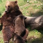 New Bear park Bern, Switzerland by eveline