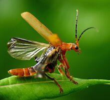 Bug! by HJIrvine