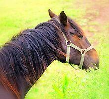 Chestnut Foal by Stan Owen
