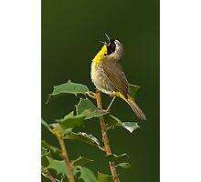 Singing Common Yellowthroat Photographic Print