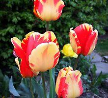 Mom's Spring Garden by Jan  Tribe