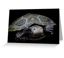 Turtle - Just Keep Swimming Greeting Card