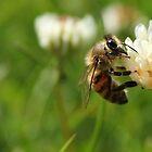 Just Buzzing Around by David Bobrick