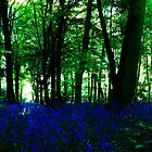 Bluebell Wood by imagejournal