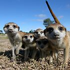 Meerkat family by George Woodcock