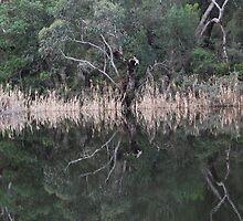 Glenelg River - Moleside  by Dianne07
