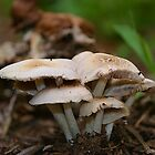 "What do you call a mushroom who likes to party?....a ""Fungi"" by DDLeach"