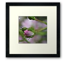 Simplistic Rosebud Framed Print