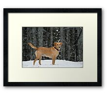 An Alabama Snow Framed Print