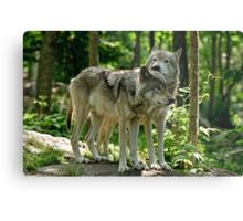 Whisper Sweet Nothing - Timberwolves  Metal Print