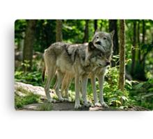 Whisper Sweet Nothing - Timberwolves  Canvas Print