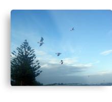 Seagulls ~ Altona Beach ~ Victoria Metal Print