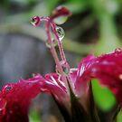 Spirals and Raindrops by PhoenixArt