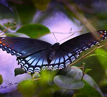 A Butterflys Repose by Nancy  Vice