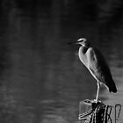 Perching Heron - B&W by Colonel-Herro