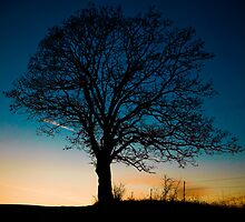 Evening Tree in Silhouette  by KathyBerger