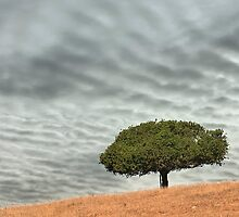 Green tree on rolling hill with dramatic sky by Soumya Mitra