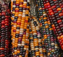 Indian Corn by tbdrew
