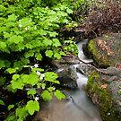 Running Past Mossy Rocks by Sam Scholes