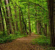 Sacred Grove Path by Sam Scholes