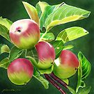 An Apple a Day by Joan A Hamilton