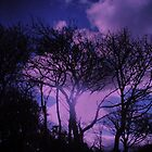 trees in moonlit sonata by mangalynney
