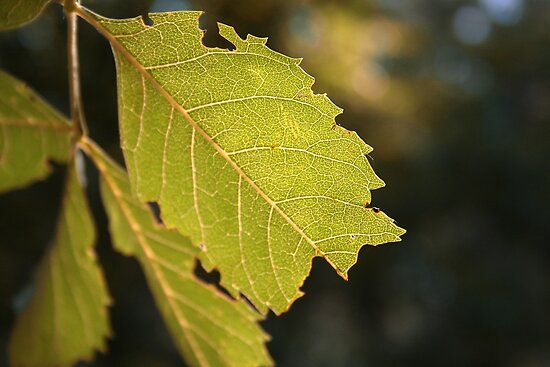 Leaf by digisenj