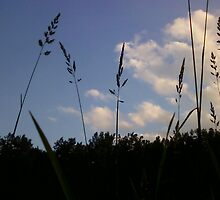"""tife e il cielo"" (Cattails and The Sky) by marianna17"