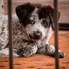 Puppy Prison by John  De Bord Photography