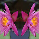 Twin Lotus by Rainy