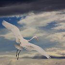 Flight of Fancy by byronbackyard