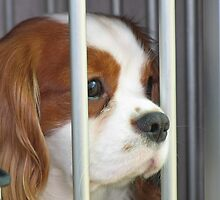 Bentley Behind Bars by Jenny Brice