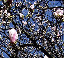 Flowerbud Spring - Whetstone, UK by Vanessa  Warren