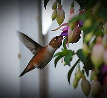 Hummingbird Delight by Jonice