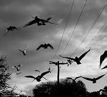 flock by Naia