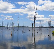 Manasquan Reservoir by reindeer