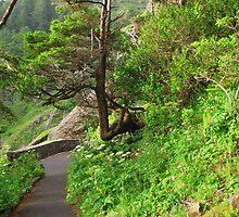 Cape Perpetua Path.....Tree Seat by trueblvr
