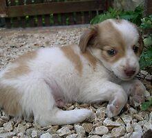 Puppy Timmy by marens