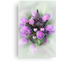 Dew Spirit Canvas Print