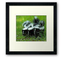 Baby Skunk Trio Framed Print