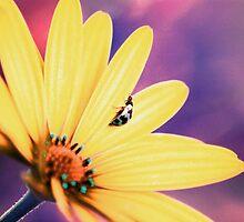 Pretty Bug Pastel by Bronwyn Bruce