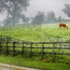 Horse in the Rain by Nadya Johnson