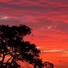red sunset by Michael  Keene