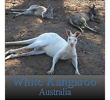 White Kangaroo Photographic Print